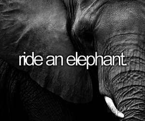 before i die, ride, and elephant image