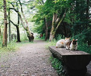 cat, nature, and bench image