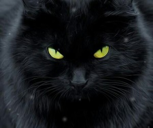 awesome, black, and meow image