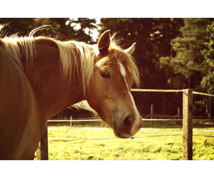 beauty, sweden, and equestrian image