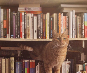 book, cat, and vintage image