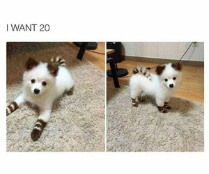 photo and puppy image