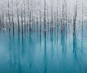 blue, ice, and trees image
