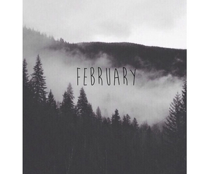 black and white, forest, and februar image