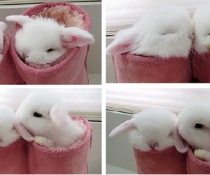 bunny, white, and cute image
