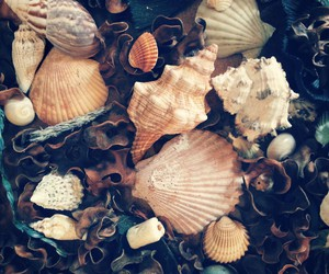 shells, beach, and beautiful image