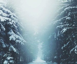 cold, escape, and forest image