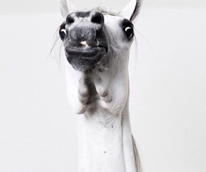 horse, smile, and cute image
