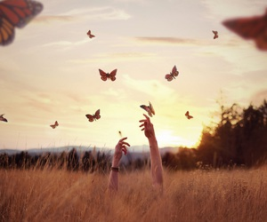 butterfly, sunset, and nature image