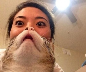 asian, cat, and funny image