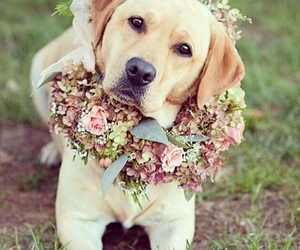 flower, puppy, and stylish image