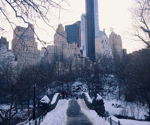 Central Park, new york city, and nyc image