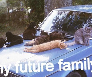 cat, funny, and future image