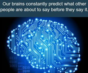 brain and fact image