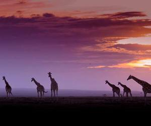 africa and Kenya image