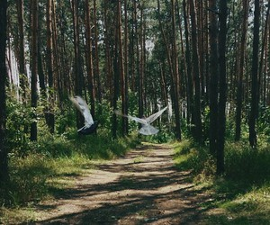 forest, sun, and travel image