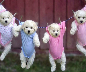 four, funny, and puppy image