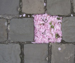 flowers, pink, and grunge image