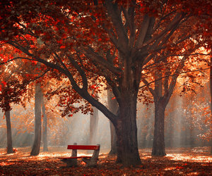 fall, autumn, and red image