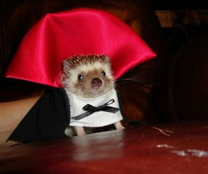 hedgehog, cute, and vampire image
