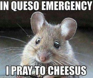 funny, cheese, and mouse image