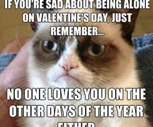 funny, grumpy cat, and cat image
