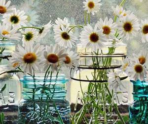 daisy, decor, and flowers image