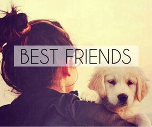 dog, friends, and Best image