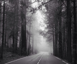 forest, road, and black and white image