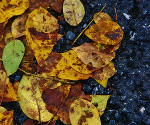 autumn, flickr, and leaves image