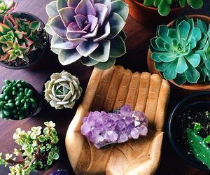 plants, crystal, and flowers image