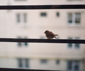bird and vintage image