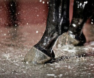 hoof and horse image