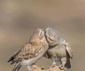nature and owls image