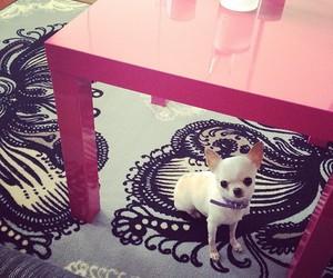 chihuahua, sweet, and error512 image