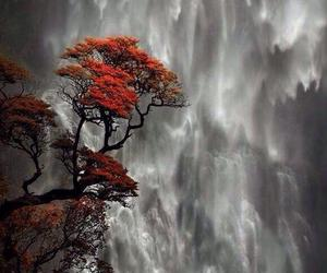 nature, waterfall, and tree image
