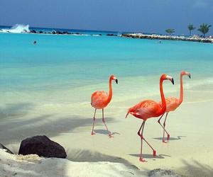 beach, flamingo, and summer image