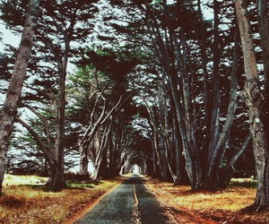 trees, nature, and road image