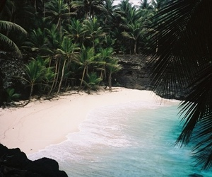 beach and jungle image