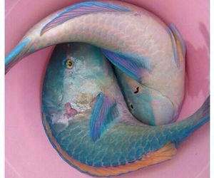 fish, pink, and blue image