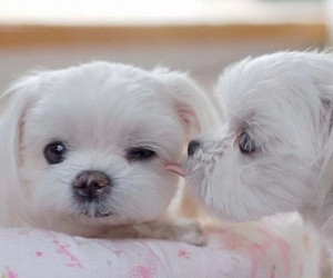 aww, puppy, and cute image