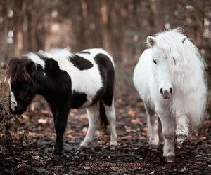 forest, horse, and pony image