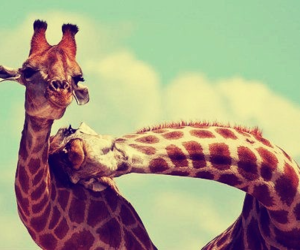 animals, giraffe, and hipster image