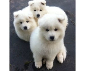 cute, adorable, and dog image