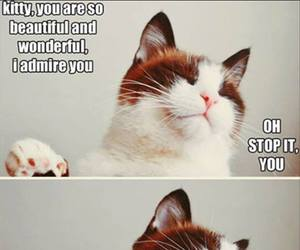 cat, funny, and kitty image