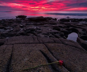 dramatic, places, and rose image