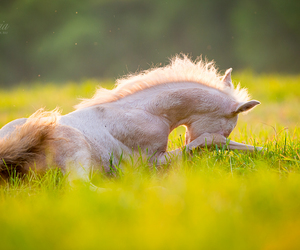 horse and summer image