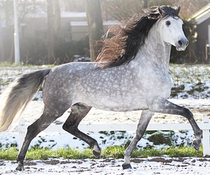 beautiful, equestrian, and free image