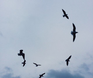 birds, magical, and clouds image