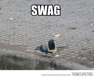 swag, funny, and bird image